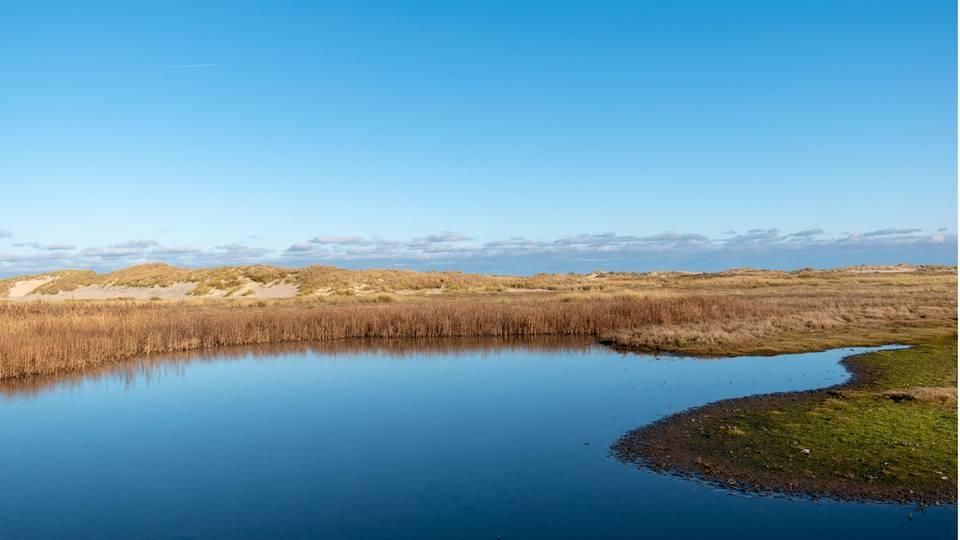 Landschaft mit Feldern und Teich auf Norderney