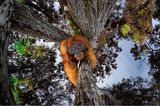 Thomas Vijayan/Nature TTL Photographer of the Year 2021