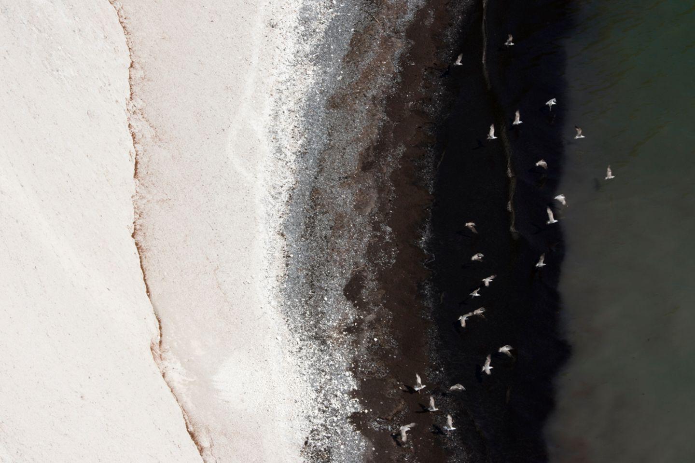 An der Kreideküste von Rügen stieben Möwen in der Tiefe über dem dunklen Gürtel zerriebener Wasserpflanzen auf - und setzen Kontrastpunkte