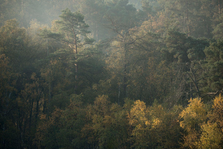 Nach einem Gewitter ziehen Dunstschleier durch den Wald. Die Farbnuancen des Laubs deuten auf eine große Vielfalt von Baumarten, sowie ein üppiges Tier- und Pflanzenleben. Selbst das Totholz pulsiert vor Vitalität. Unzählige Insekten und Pilze leben in ihm. Nichts geht zu Ende im geschützten Kreislauf des Waldes