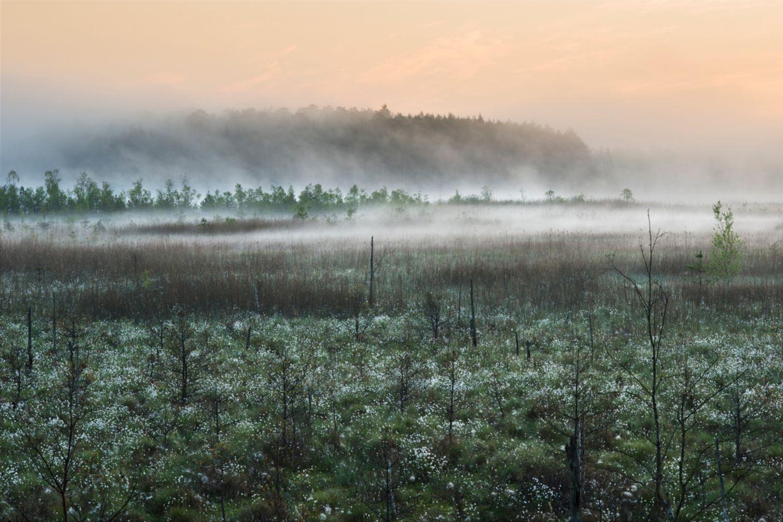 Blick auf den Großen Serrahnsee frühmorgens im Mai: Wenn die Nächte noch kalt sind, die Tage wärmer als 15 Grad und kein Wind über das Land streicht, tanzen die Nebel zum Sonnenaufgang auf den Feuchtwiesen. Hunderttausend weiße Wollgras-Blüten strecken sich zum Licht