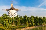 Windmühle in den Weinbergen von Retz