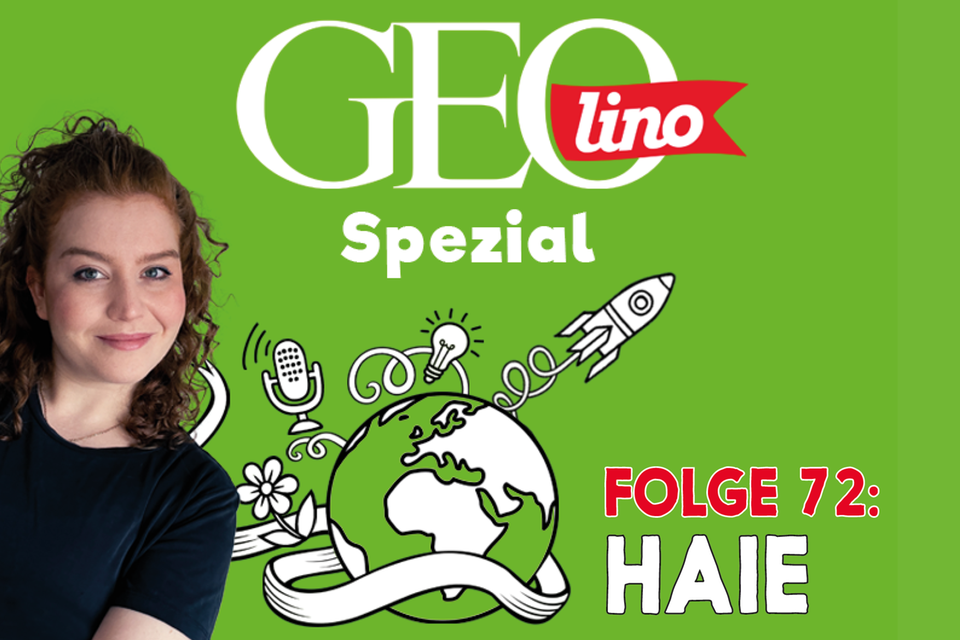 In Folge 72 unseres GEOlino-Podcasts geht's um Haie