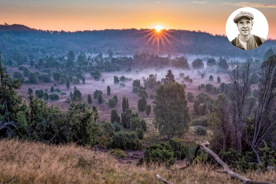 Wenn ich am Wochenende die A7 in Höhe Bispingen Richtung Oberhaverbeck abfahre, ist da immer ein Kribbeln, weil mir alles so vertraut ist und sich richtig anfühlt. Hier stimmt das Licht, die Entfernung zum Horizont. Hier umgibt mich, gerade zur Zeit der Heideblüte Mitte August, ein überwältigender Duft. Honig, Wacholder. Das krautige Aroma der Kiefern. Aber auch im Herbst, wenn die Felder umgepflügt werden, entströmt der Erde ein intensiver Geruch, wie ich ihn nur von hier kenne. Oft nehme ich dann eine Handvoll Ackerboden und rieche daran. Ein unbeschreiblicher Glücksmoment.  Mein Tipp Übernachten in einer alten, für die Gegend typischen Hofanlage: stimbekhof.de. Regionale Spitzenküche: Hotel Rieckmann  Andreas Pufal, Visual Director