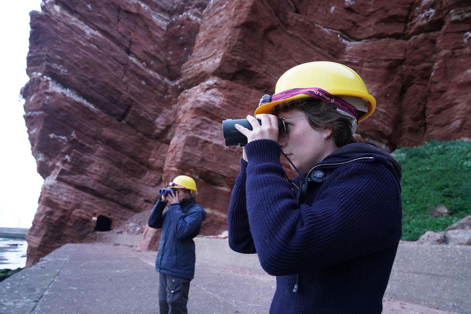 Freiwillige Helfer des Vereins Jordsand auf Helgoland, beobachten die Trottellummenküken am Lummenfelsen