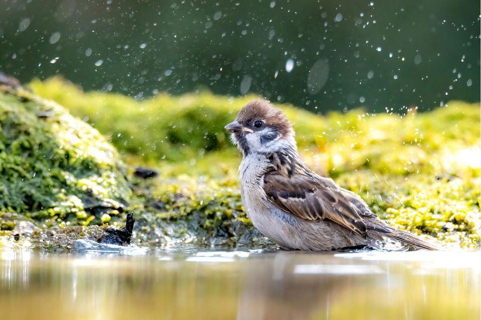 Vogel an Wasserstelle