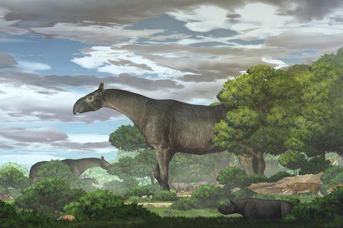 Riesennashorn Paraceratherium linxiaense