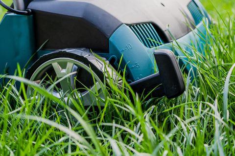 Vertikutierer im Gras