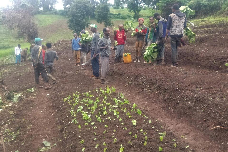 Mitglieder des PFM-Gebietes Shomba Sheka legen eine Baumschule an. Hier wachsen inzwischen 6.000 Setzlinge der heimischen Arten Bersama absinica, Cordia africana, Ficus sur und Militia ferruginea
