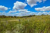 Weide mit Wildblumen und Pferden: Im Nationalpark Unteres Odertal wartet weitgehend sich selbst überlassene Natur