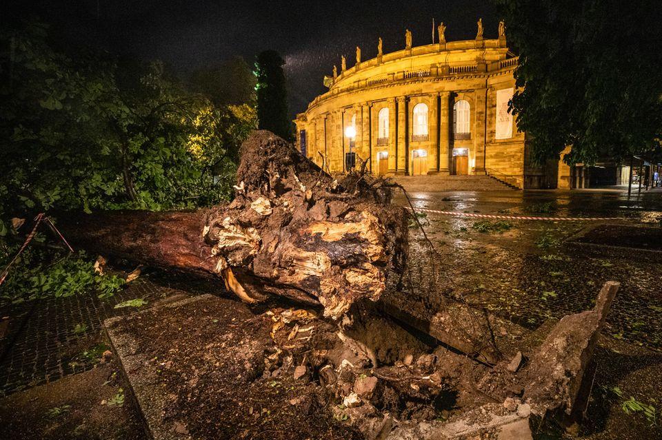 Umgestürzter Baum in Stuttgart