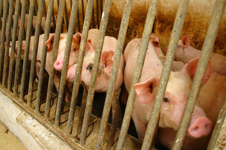 """Die EU-Kommission schlägt vor, die Käfighaltung von """"Nutztieren"""" bis 2027 zu beenden"""