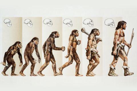 Unsere wahre Geschichte: Von wem stammen wir wirklich ab?