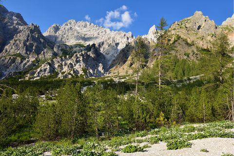Während im Flachland viele Nadelbäume steigenden Temperaturen ausgeliefert sind, können sie im Gebirge wie hier im Wimbachtal bei Berchtesgaden prinzipiell in höhere Lagen ausweichen