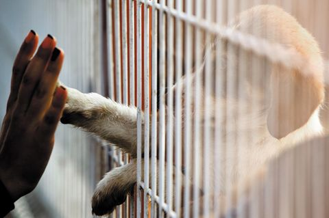 Immer mehr Tierheime geraten in Corona-Zeiten an den Rand ihrer Kapazitäten