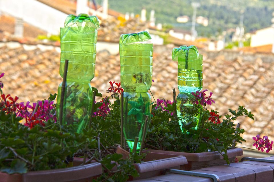 PET-Flaschen stecken in Blumenkästen zur Pflanzenbewässerung