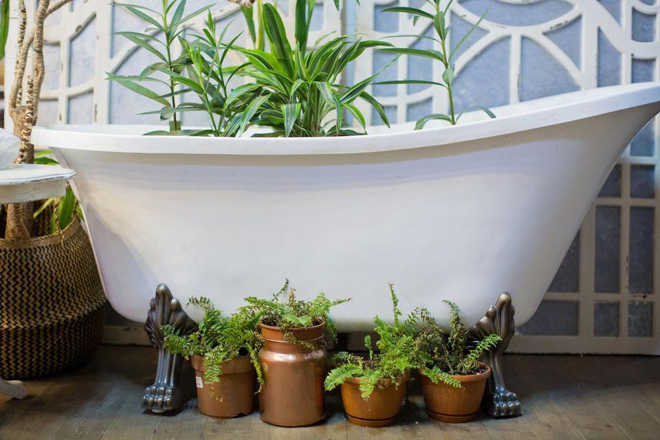 Pflanzen stehen zum Bewässern in der Badewanne