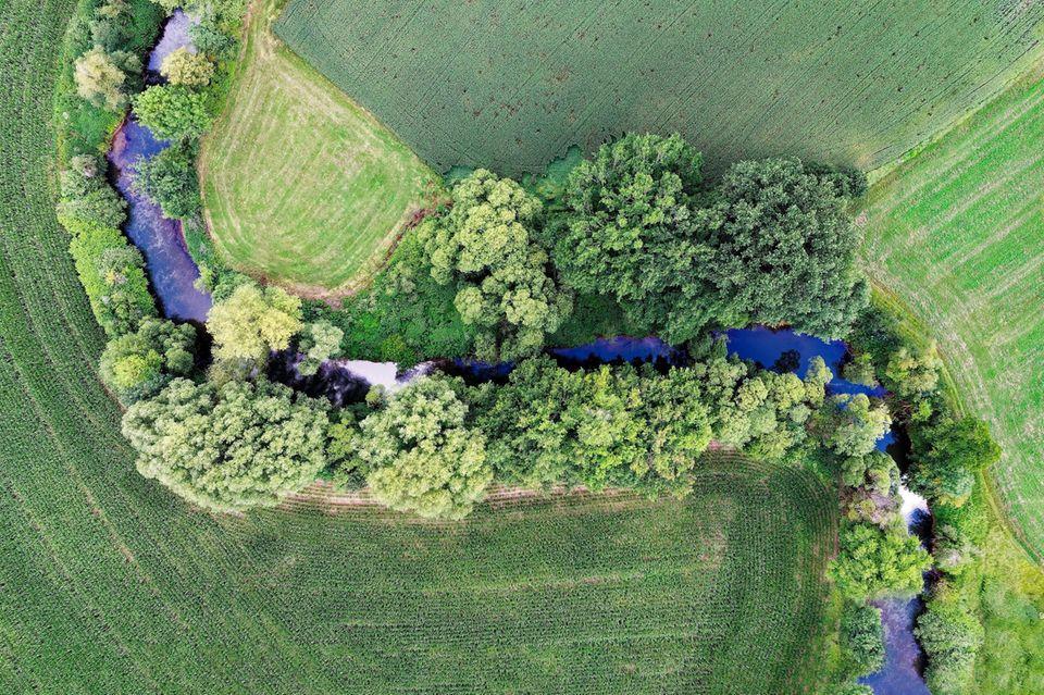 Gülle, Dünger, Pestizide: Bäche, die an landwirtschaftlich genutzte Flächen grenzen, weisen oft zu hohe Schadstoffbelastungen auf