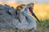 Robin Ulery/Audubon Photography Awards/2021 Amateur Award Winner