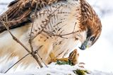 Steve Jessmore/Audubon Photography Awards/2021 Professional Honorable Mention