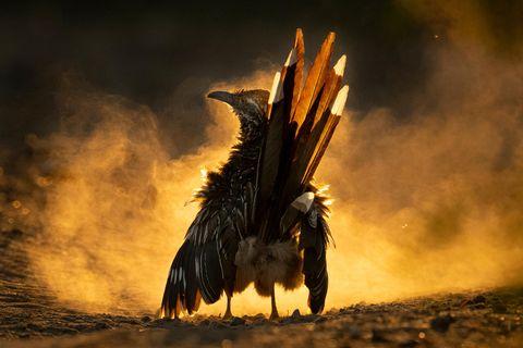 Audubon Photography Awards/2021 Grand Prize