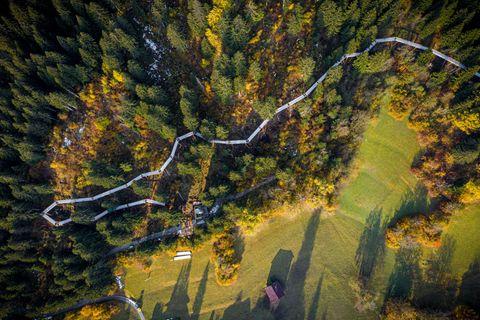 Der längste Baumwipfelpfad der Welt