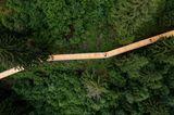 Blick aus der Vogelperspektive auf den Baumwipfelpfad Laax