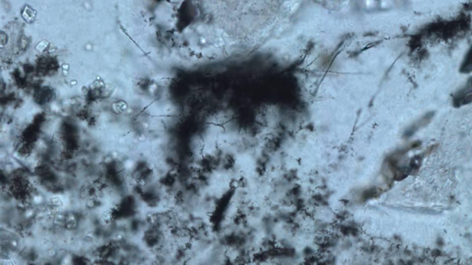 Mikrofossilien unter dem Mikroskop