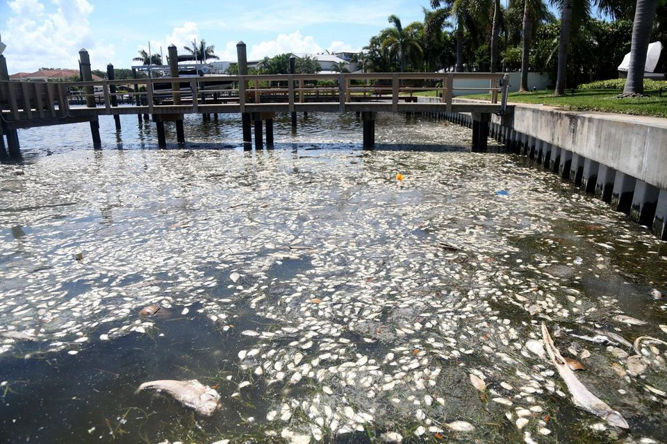 Fischsterben in einem Kanal in Florida, USA