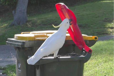 Ein Kakadu öffnet einen Haushaltsmülleimer