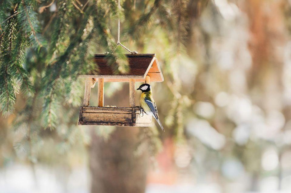 Vogel am Futterhaus