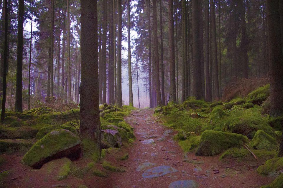 Wald in der Oberpfalz in Bayern