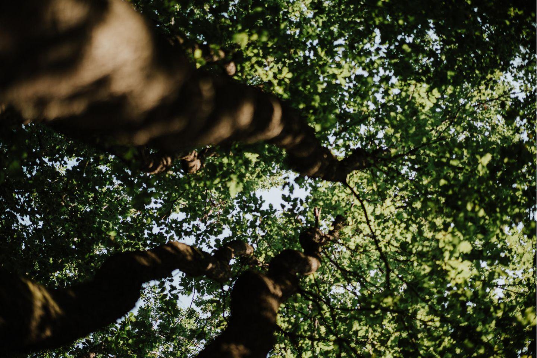 live & kostenlos: Der nationale Waldgipfel 2021 – mit Robert Habeck, Luisa Neubauer und Co.