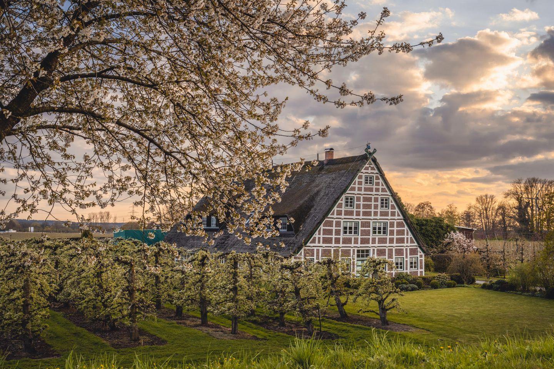 Das Alte Land ist das größte zusammenhängende Obstanbaugebiet Nordeuropas
