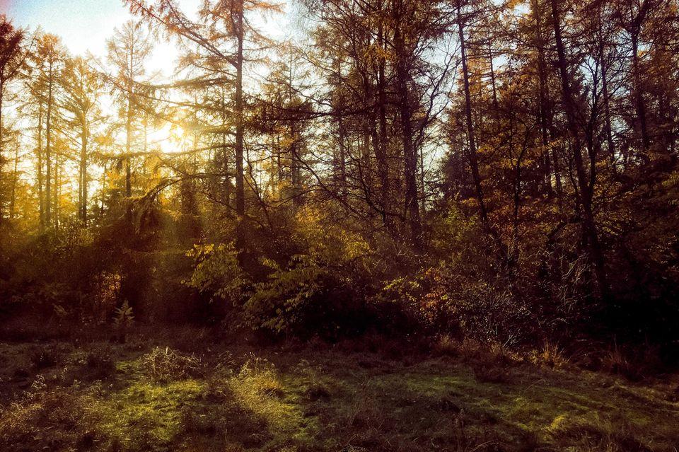 Wald bei Aukrug