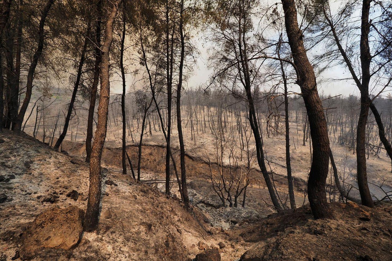 Ein verbrannter Wald in der Nähe des Dorfes Limni, etwa 160 Kilometer nördlich von Athen, auf der Insel Euböa. In Teilen Südeuropas und in Griechenland kämpfen die Menschen weiter gegen heftige Waldbrände und extreme Hitze