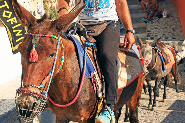 """Santorin, Griechenland: Sogenannte """"Esel- und Maultier-Taxis"""" schleppen Touristen auf 400 Höhenmeter"""