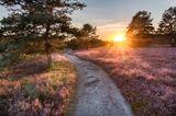 Heischnuckenweg in der Lüneburger Heide bei Sonnenuntergang