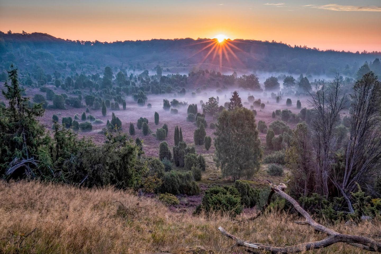 Der Totengrund in der Lüneburger Heide während der Heideblüte bei Sonnenaufgang und Nebel