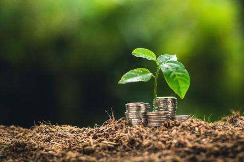 Finanzen: Nachhaltig Geld anlegen: So gelingt Rendite mit gutem Gewissen