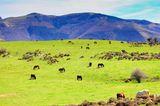 Pferde grasen im Naturpark Pagoeta