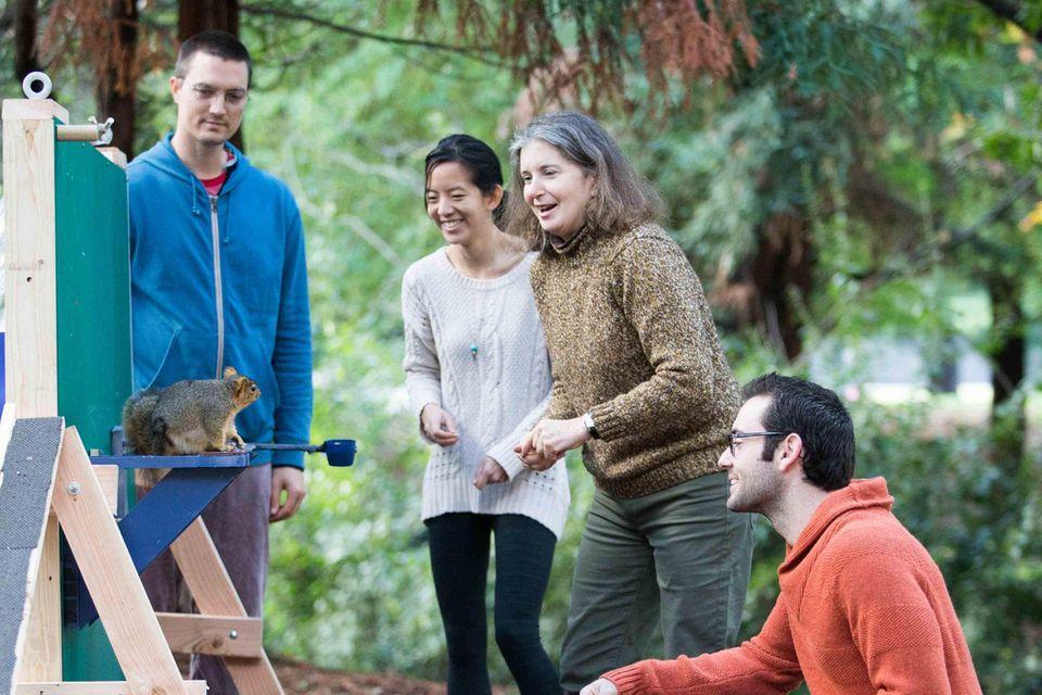 Mitglieder der Forschungsgruppe der Universität von Kalifornien am Hindernisparcours mit einem wilden Fuchshörnchen