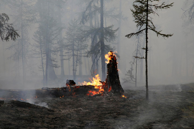 Reste eines Baumes brennen in Russland
