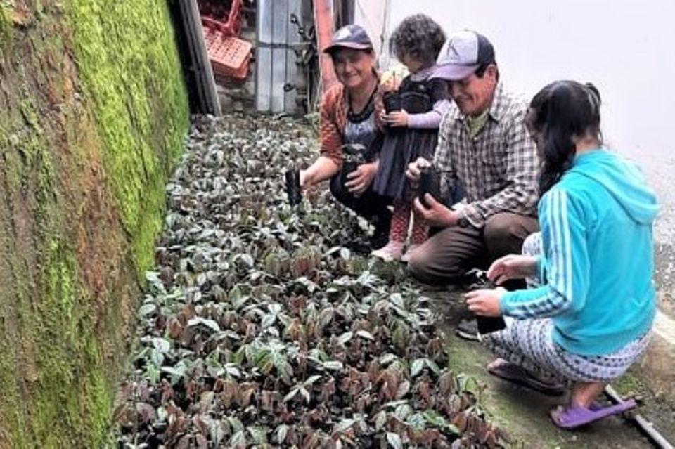 Guaba-Pflanzen, gezogen von Sadie Jativa