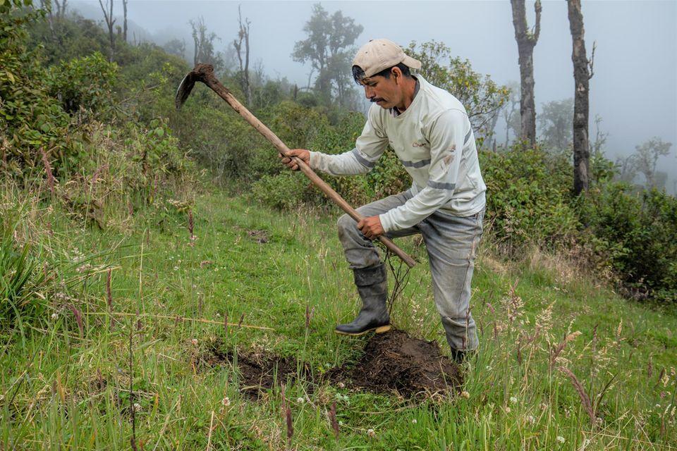 Für die nächste Pflanzaktion werden schon einmal Löcher ausgehoben