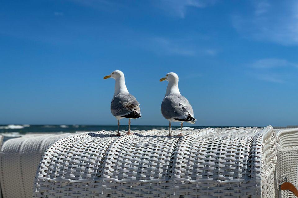 Zwei Möwen sitzen auf einem Strandkorb