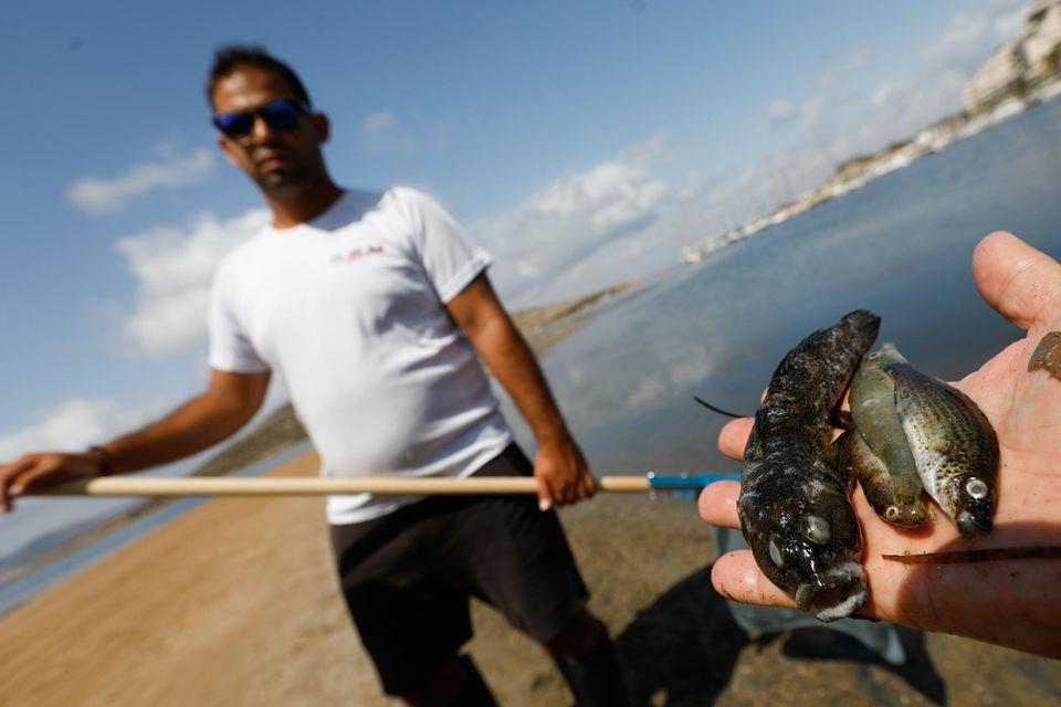 Beamte der Guardia Civil haben an verschiedenen Stellen des Mar Menor, Proben entnommen, um sie weiter zu analysieren. Die Todesursache der Fische ist derzeit unbekannt