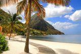 Auf St.Lucia steht eine Palme am weißen Sandstrand vor einem Berg