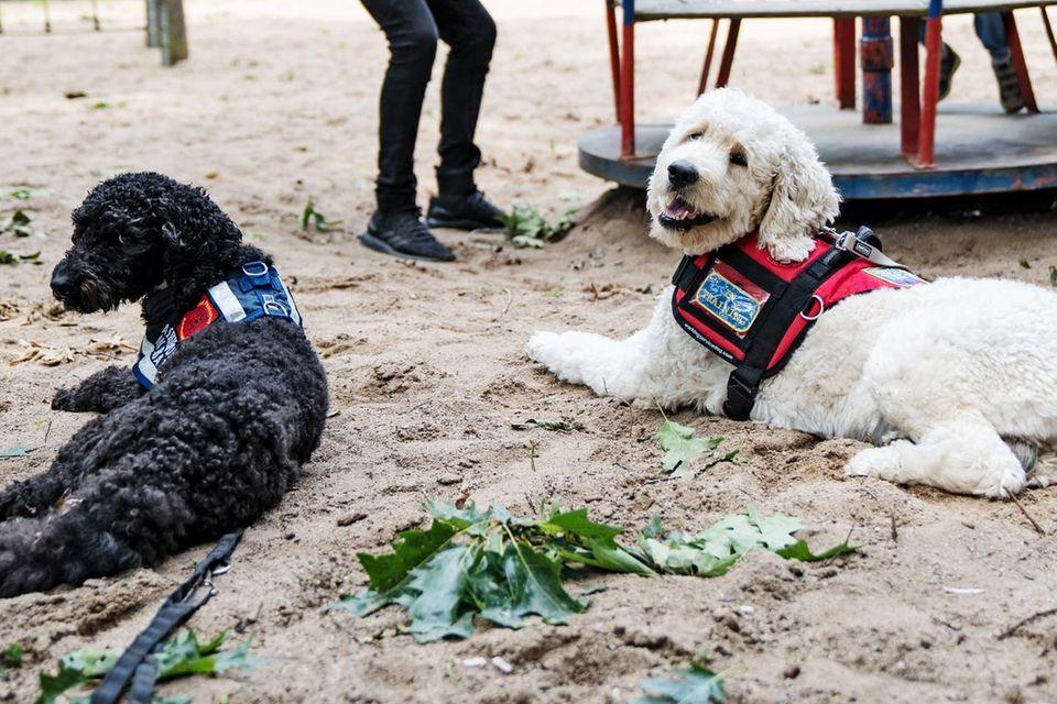 Gut behütet: Nurik und Galin spielen amKarussell. Ihre Assistenzhunde dürfen auch dorthin, wo Hunde sonst verboten sind, auf Spielplätze etwa