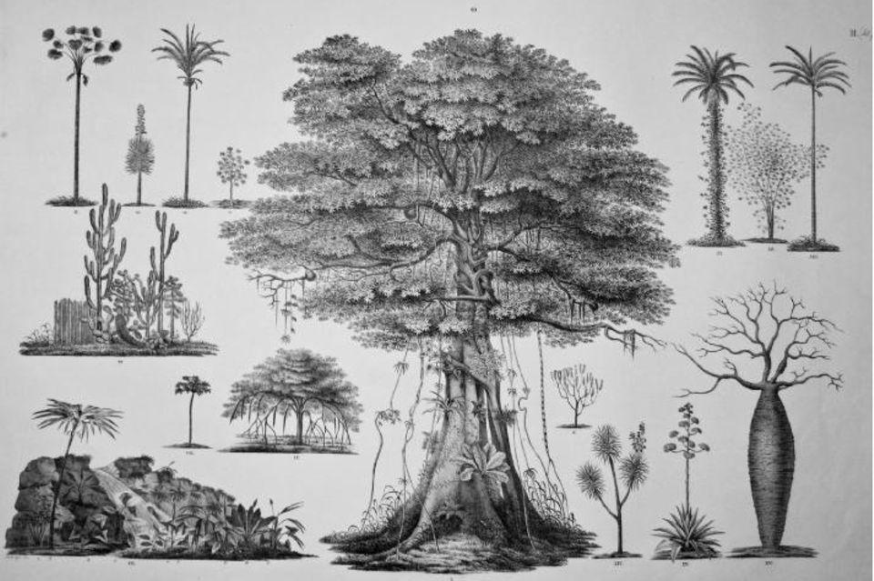 Quelle: Spix & Martius 1824 (Vol.3, Reiseatlas), S. 75